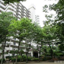 和泉市伏屋町マイシティ泉北B棟 もう一人の家族ペットと暮らせます 上層階で見晴らし良好です 室内リフォーム済みで即入居可能です